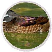 Female Wood Duck Round Beach Towel
