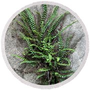 Fern Growing From Crack In Limestone Round Beach Towel