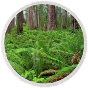 Ferns And Redwoods Round Beach Towel