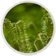 Ferns Fiddleheads Round Beach Towel