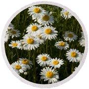 Field Of Oxeye Daisy Wildflowers Round Beach Towel