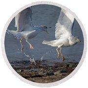 Fighting Gulls Round Beach Towel