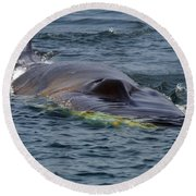 Fin Whale Charging Round Beach Towel