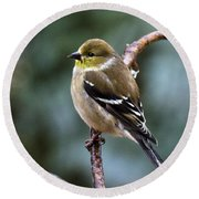 Finch In An Ice Storm Round Beach Towel