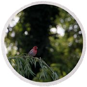 Finch In The Willow Round Beach Towel