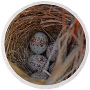 Finch Nest With Eggs  Round Beach Towel