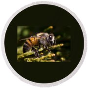 First Bee For The Summer Round Beach Towel