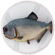 Fish Mount Set 04 A Round Beach Towel