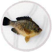 Fish Mount Set 08 A Round Beach Towel