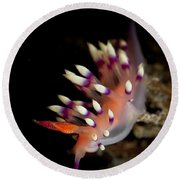 Flabellina Exoptata Nudibranch, Pulau Round Beach Towel