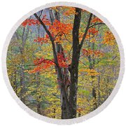 Flaming Fall Foliage Round Beach Towel