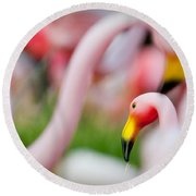 Flamingo 4 Round Beach Towel