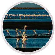 Flamingo Gathering Round Beach Towel