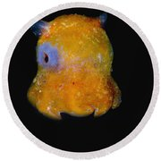 Flapjack Octopus Round Beach Towel
