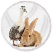 Flemish Giant Rabbit And Call Duck Round Beach Towel