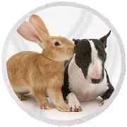 Flemish Giant Rabbit And Miniature Bull Round Beach Towel