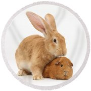 Flemish Giant Rabbit With Red Guinea Pig Round Beach Towel