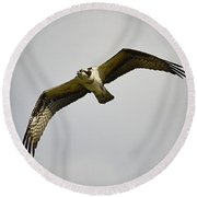 Flight Of The Osprey Round Beach Towel
