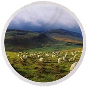 Flock Of Sheep Grazing In A Field Round Beach Towel