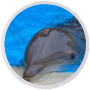 Published Secret Lives Dolphins Round Beach Towel