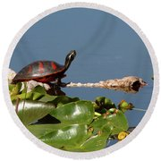 Florida Redbelly Turtle Round Beach Towel