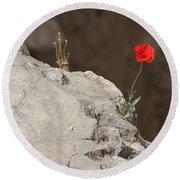 Flower By The Pool Of Bethesda - Israel Round Beach Towel