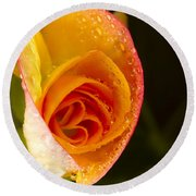 Flower Rieger Begonia 5 Round Beach Towel
