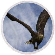Flying European Sea Eagle I Round Beach Towel
