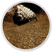 Fools Gold And Pine Cone Round Beach Towel