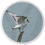 Foot Up Wing Test Round Beach Towel