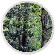 Forest Trees Round Beach Towel