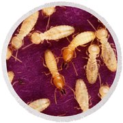 Formosan Termites Round Beach Towel by Science Source