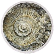 Fossil Geology Round Beach Towel