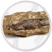 Fossilized Fish Round Beach Towel
