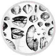 Fossilized Shells, 1844 Round Beach Towel