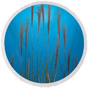 Fountain Grass In Blue Round Beach Towel