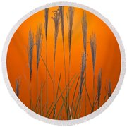 Fountain Grass In Orange Round Beach Towel