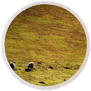 Four Sheep Round Beach Towel
