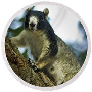 Fox Squirrel Round Beach Towel by Phill Doherty