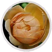 Fragrant English Rose Round Beach Towel