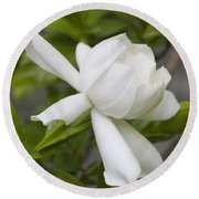 Fragrant White Gardenia Blossom Round Beach Towel