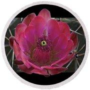 Framed Fuchsia Cactus Flower Round Beach Towel