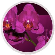 Framed Orchids Round Beach Towel