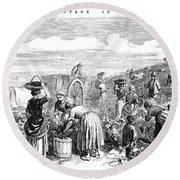 France: Grape Harvest, 1854 Round Beach Towel