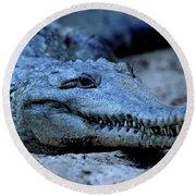 Freshwater Crocodile Round Beach Towel