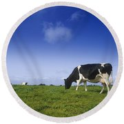 Friesian Cow Grazing In A Field Round Beach Towel