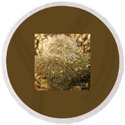 Frilled Sea Anemone Round Beach Towel