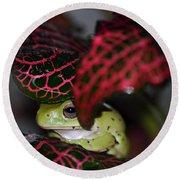 Frog On A Leaf Round Beach Towel