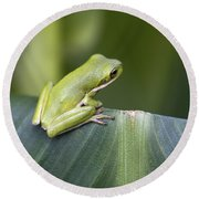 Froggie On A Leaf Round Beach Towel