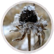 Frost And Snow On Dead Daisy Round Beach Towel